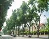 Giá trị biệt thự kiến trúc Pháp tại Hà Nội